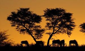 140-suedafrika-flugtarif